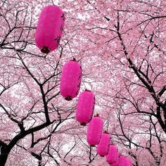 Japanese lanterns and cherry blossoms
