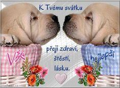 Labrador Retriever, Retro, Birthday, Quotes, Animals, Labrador Retrievers, Quotations, Birthdays, Animales