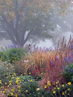 Plano Prairie Garden: November 2011 | Journal of the transformation of my front yard from a manicured lawn to a semi-controlled prairie garden filled with prairie grasses and flowers.