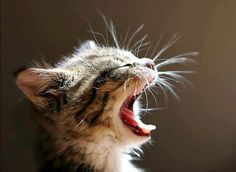 What a Yawn!