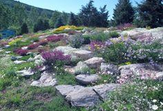 Yampa River Botanic Garden in Steamboat Springs, Colorado Steamboat Springs Colorado, State Of Colorado, Colorado Rockies, Most Beautiful Gardens, Beautiful Places, Nevada, Utah, Rock Rose, Outdoor Pictures