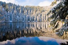 he lake in Schwarzwald. The Black Forest is one of Germany's most popular tourist destinations. Photo by Kevin van Dijk Wonderful Places, Beautiful Places, Beautiful Scenery, Amazing Places, Beautiful Landscapes, Black Forest Germany, Forest Scenery, Seen, Belleza Natural