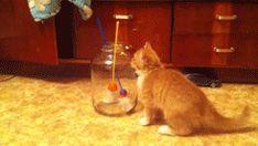 Cats are liquid.