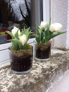 #deko #Tulpen