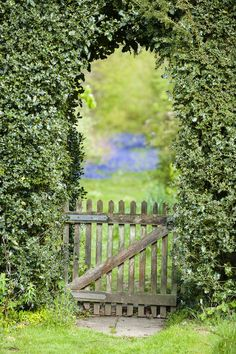 Through the garden gate leads into a sea of bluebells, bridging the gap between cultivated and wild #WTgardens