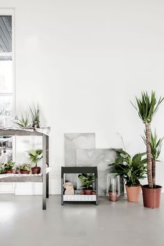 ikea botanical | April and May