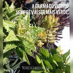 A #grama do #vizinho sempre é mais verde. Parsley, Celery, Vegetables, Food, Grass, Old Fashion, Princess, Green, Essen