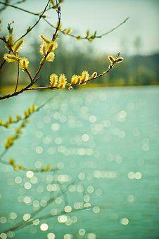 'Frühling am See' ein Foto von 'birdy`s'