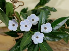 Blumenstecker, Blumen aus Keramik, hellblau von karolart auf Etsy