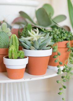 Succulents and Cactus Succulent Terrarium, Cacti And Succulents, Planting Succulents, Planting Flowers, Green Plants, Air Plants, Indoor Plants, Diy Horta, Cactus Plante