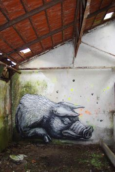 Roa's Work: Photo