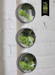 Easy to grow No.1 ♡ 【Air plants】 19 displays that can be imitated immediately   Gathering