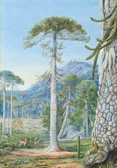 4. Puzzle-Monkey Trees and Guanacos, Chili by Marianne North