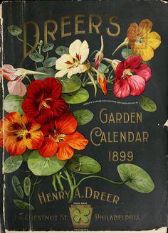 New Flowers Illustration Vintage Garden Markers Ideas Seed Packaging, Vintage Packaging, Vintage Labels, Vintage Cards, Vintage Postcards, Flower Packaging, Flowers Illustration, Garden Illustration, Etiquette Vintage