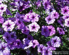 Que hermosos colores lilas!