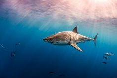 When you see a shark swimming in its natural habitat... only then will you know what beautiful is!!!
