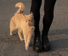 Imagen de cat, black, and grunge I Love Cats, Cute Cats, Baby Animals, Cute Animals, Cat Aesthetic, Cat Lady, Cats And Kittens, Kitty Cats, Fur Babies