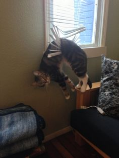 And a feline performance artist in the middle of a one-cat show about Chaos. | 25 Animal Pictures That Will Restore Your Faith In Animals