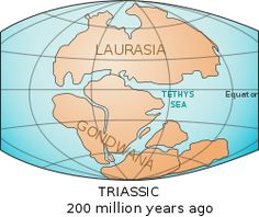 Worksheets Before Pangea, Rodinia Worksheet Answers pangaea looks like a pretty accurate version of what the earths originally gondwanaland was southernmost two supercontinents other being laurasia that later became parts th
