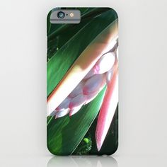 This design is an original photograph of a pale pink tropical flower.
