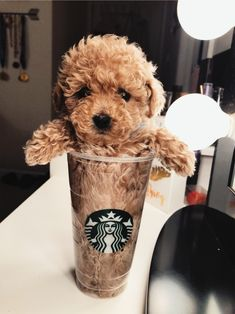72 Funny Fuzzy Animals To Brighten Your Day - Doggo❣ - Perros Graciosos Baby Animals Pictures, Cute Animal Pictures, Animals And Pets, Animals Images, Cute Little Animals, Cute Funny Animals, Funny Dogs, Cute Dogs And Puppies, Doggies