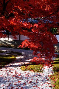 Crimson Leaves Above and Below :: 永源寺 Eigen-ji Shiga,Japan  by Tsuguharu Hosoya