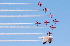 Llandudno student snaps seagull 'photobombing' Red Arrows - Daily Post
