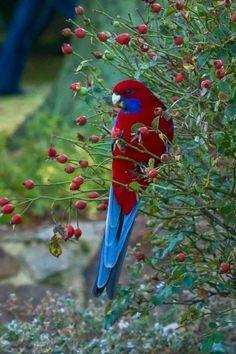 (2) Tumblr Beautiful Creatures, Animals Beautiful, Cute Animals, Most Beautiful Birds, Pretty Birds, Tropical Birds, Colorful Birds, All Birds, Love Birds