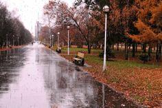 Картинки по запросу осень в парке дождь