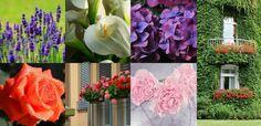 Cualquier persona con conocimientos básicos podrá disfrutar de un jardín…