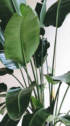 Ideas For Plants Wallpaper Desktop Trees - Foliage & Florals - Exotic Plants, Green Plants, Tropical Leaves, Tropical Plants, Plantas Indoor, Plant Wallpaper, Wallpaper Desktop, Plant Aesthetic, Plant Background