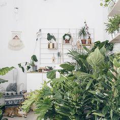 """Polubienia: 759, komentarze: 9 – Plantarium  Plants & Decor (@plantarium_art) na Instagramie: """"Taki busz w sklepiku . . . #urbanjunglebloggers #urbanjungle #warsaw #city #warsawjungle…"""""""