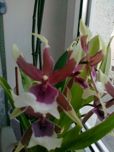 Nice Nice, Plants, Orchids, Plant, Nice France, Planting, Planets