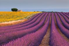 Could be Provence or California.  Either way, it's brilliant.