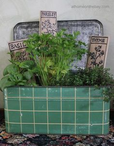 Kitchen Herb Garden, What a Great idea. She used a old bread box. ♥♥♥