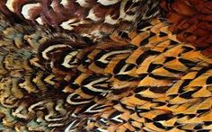 Real Animal Skin Textures in High Definition Feather Texture, Texture Art, Pattern Pictures, Pattern Images, Patterns In Nature, Textures Patterns, Tableaux D'inspiration, Animal Silhouette, Feather Pattern
