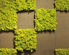 Muro Verde - mosstile