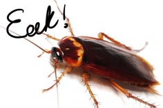 Our expert has two easy ways to get rid of roaches for good.