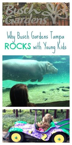 5 Reasons to Visit Busch Gardens Tampa with Young Kids