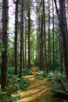 The wild forest in England countryside Forest Trail, Wild Forest, Forest Path, Magical Forest, Tree Forest, Haunted Forest, Forests In England, Countryside Wallpaper, England Countryside