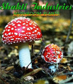 Mushroom is fungal growth that typically takes the form of a domed cap on a stalk, with gills on the underside of the cap. http://www.mushroomplants.co.in/