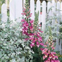 Blumen schöne Pflanzen Garten Gestaltung