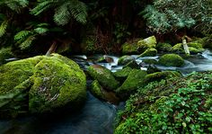 Moss Rocks in Mount Baw Baw National Park,Victoria