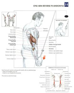 One Arm Reverse Pushdowns ~ Re-Pinned by Crossed Irons Fitness