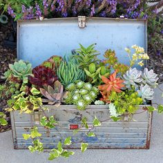 Use an old toolbox as a succulent planter