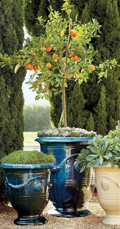 Urn-shaped and adorned with garlands and medallions, these hand-glazed ceramic planters are a staple in French gardens. Plants, French Garden, Outdoor, Outdoor Gardens, Dream Garden, Beautiful Gardens, Backyard, Outdoor Planters, Indoor Outdoor Planter