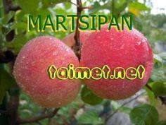 Virolainen herkku-syysomenalajike. Hedelmässä hieno marsipaania muistuttava aromi. Keltainen, peiteväri oranssinpunainen. Suurehko hedelmä. Puu melko voimakaskasvuinen ja terve. Satoikä alkaa verrattaen myöhään. Satoisa. Talvenkestävyys hyvä. Rupea ei ole esiintynyt emopuiden hedelmissä. Tulee myöhään satoikään... Apple, Fruit, Vegetables, Garden, Food, Apple Fruit, Garten, Lawn And Garden, Essen