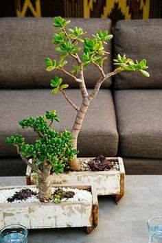 Sublimez votre int rieur avec des plantes carnivores for Porte plantes dinterieur truffaut