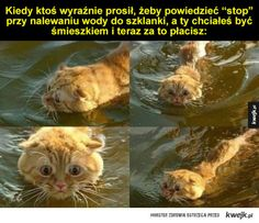 I po co ci to było? Tumblr Posts, Best Memes, The Funny, Fun Facts, Haha, Humor, Disney, Pictures, Animals