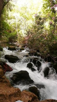 Jordan River, Israel by louise57